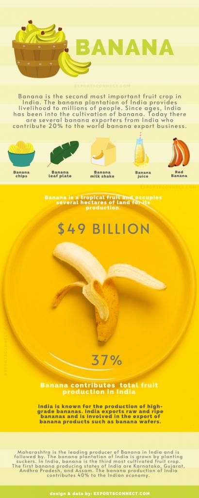 Exporters of Banana India
