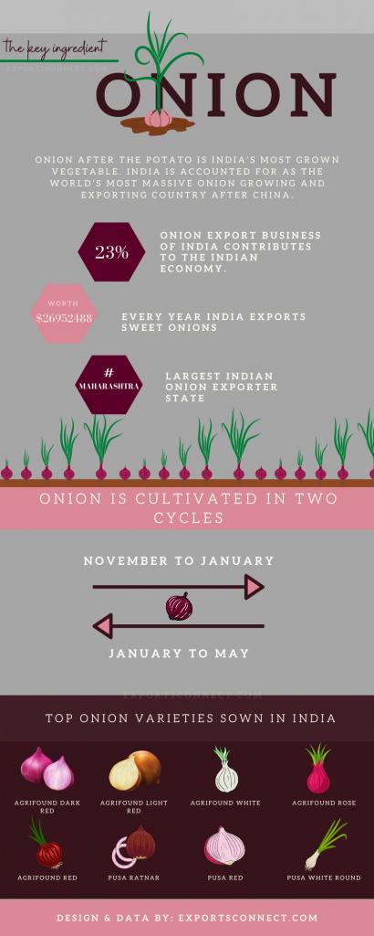 Onion Exporters India